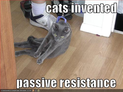 funny-pictures-cats-invented-passive-resistance1