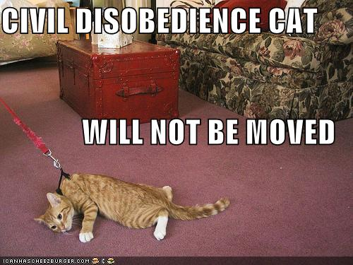 funny-pictures-civil-disobedience-cat